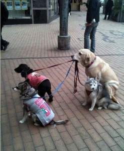 Take the Dogs Shopping